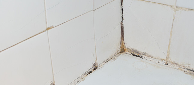 Mold Inspection In Bathroom